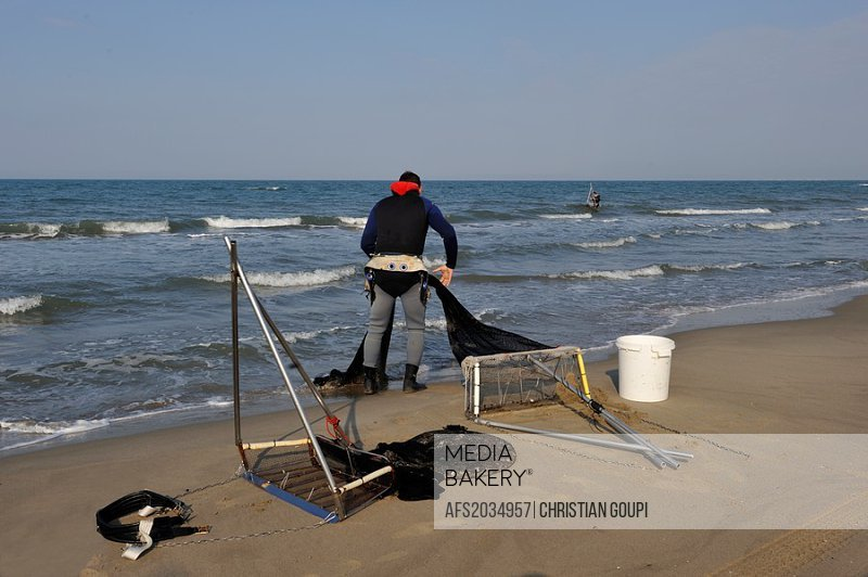 Tellines shell fisherman on the Espiguette beach, Grau du Roi, Gard department, France, Europe