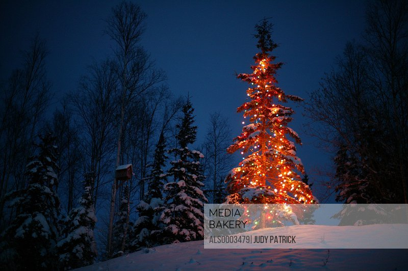Christmas Tree Outside.Photo By Alaska Stock Lighted Christmas Tree Outside Next To Bird House Night Southcentral Alaska Winter Mat Su Valley