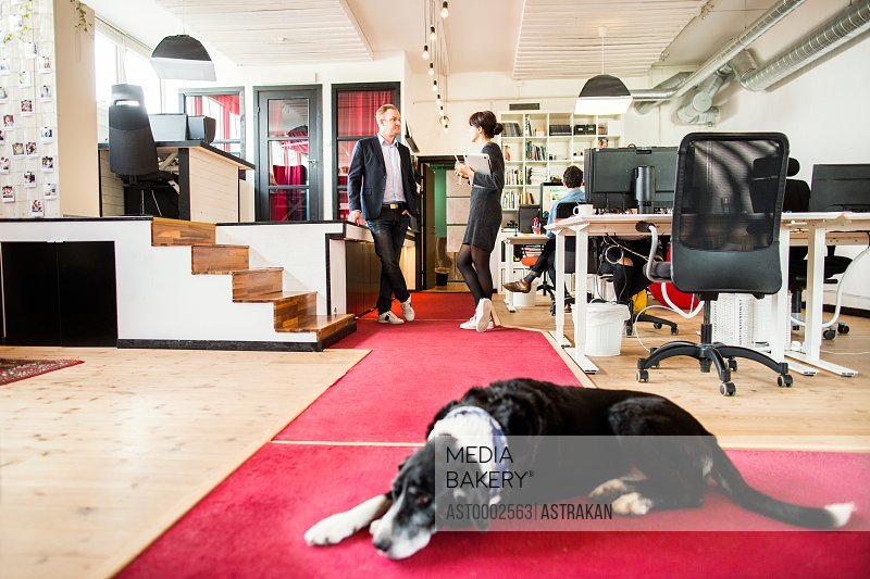 Dog sleeping on floor with business people discussing in background at office