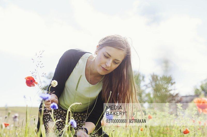 Woman picking poppy flowers growing on grassy field