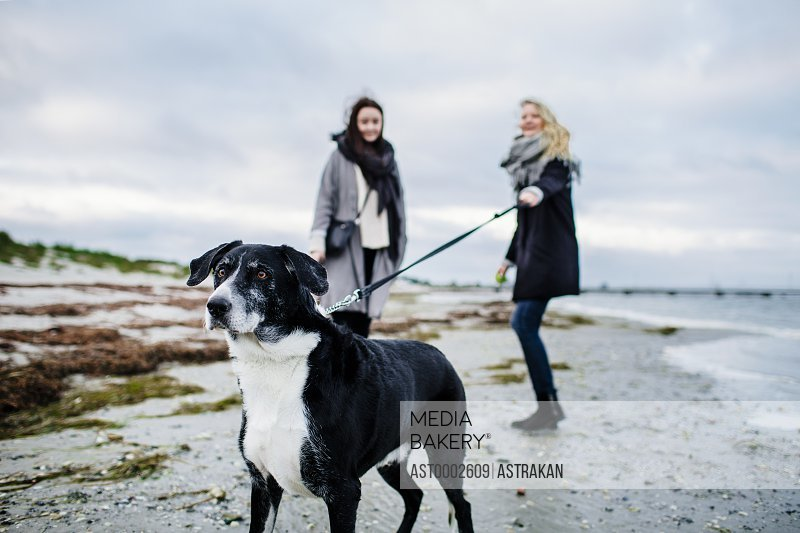 Woman holding leash of dog while standing with friend on beach