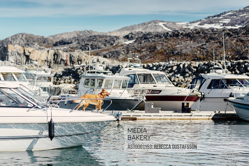 Dog standing on yacht moored at river against mountains