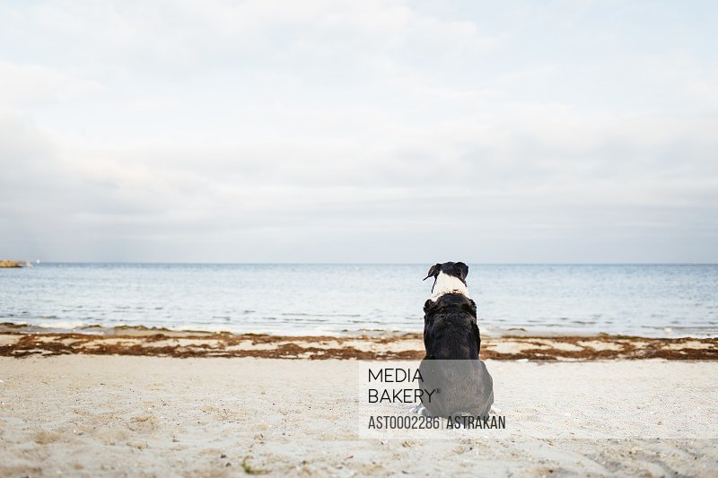 Rear view of dog relaxing on beach against sky