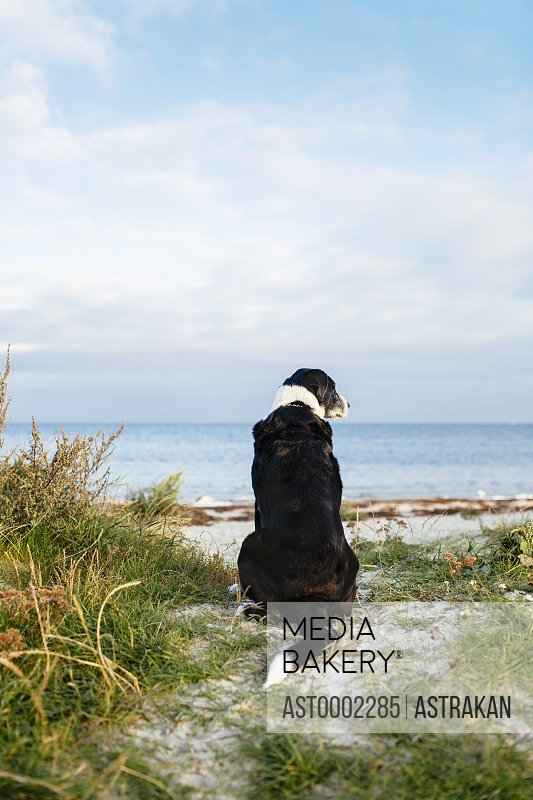 Rear view of dog sitting on beach against sky