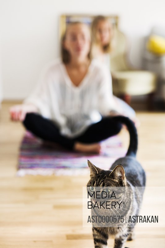 Tabby in front of female friends doing yoga on floor at home