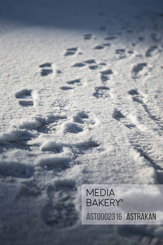 Close-up of footprints on snow