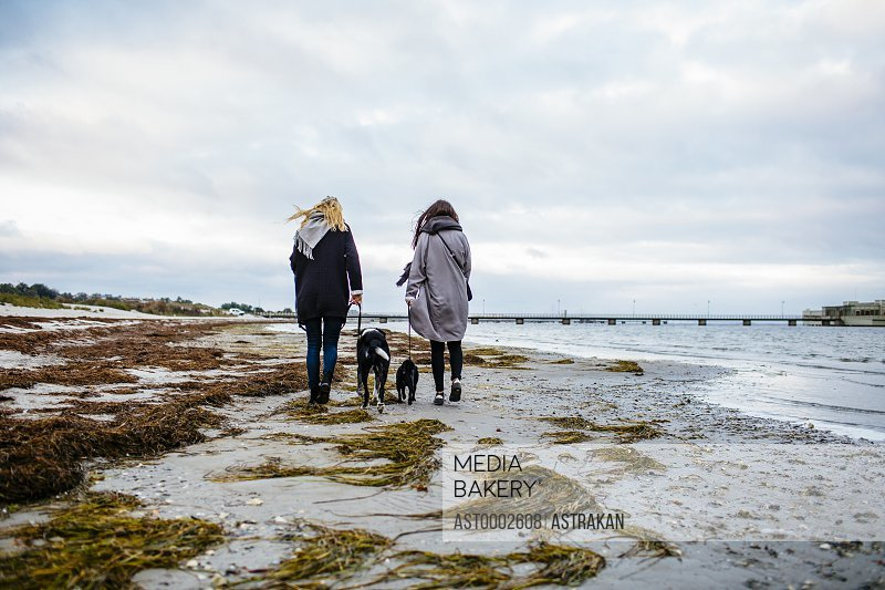 Rear view of female friends walking with dogs on shore against sky