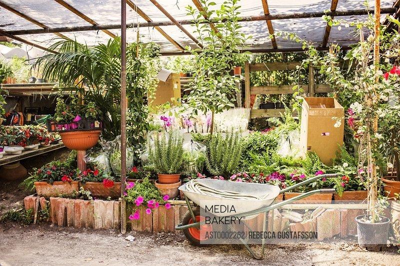 Wheelbarrow by plants growing in greenhouse