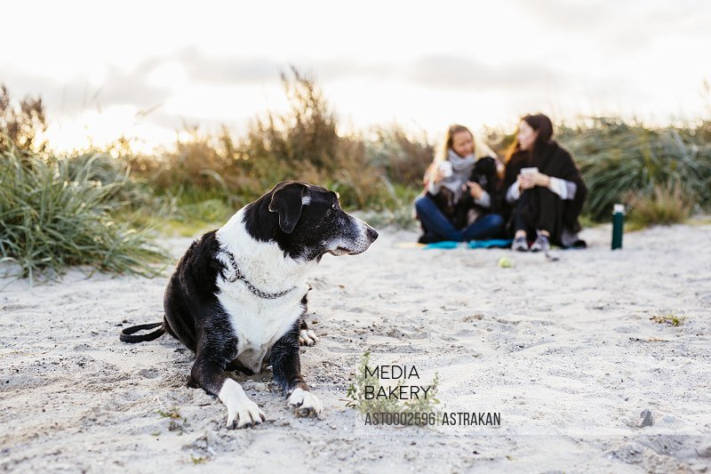 Dog relaxing on beach while female friends sitting in background