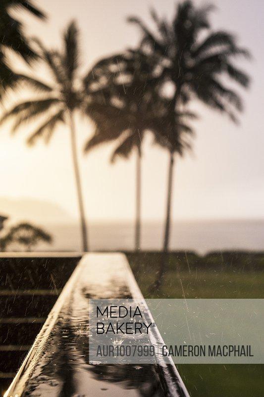 Photograph of rain falling against silhouettes of palm trees at sunset, Kauai, Hawaii, USA
