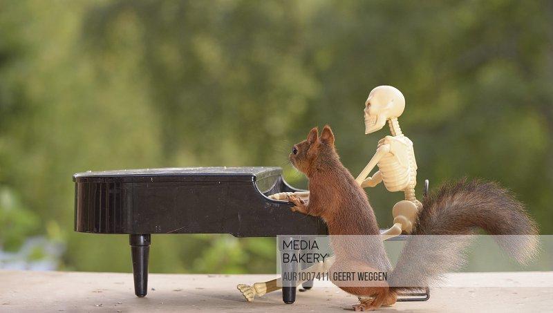 Red squirrel and skeleton behind piano Bispgarden, Jamtland, Sweden