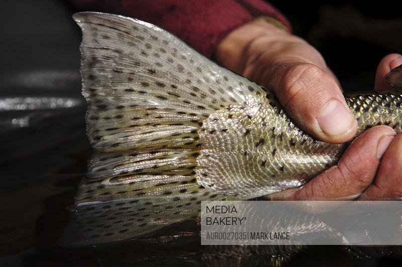 Fly Fishing Patagonia, Argentina