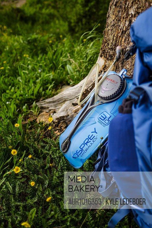 Water bottle resting on tree