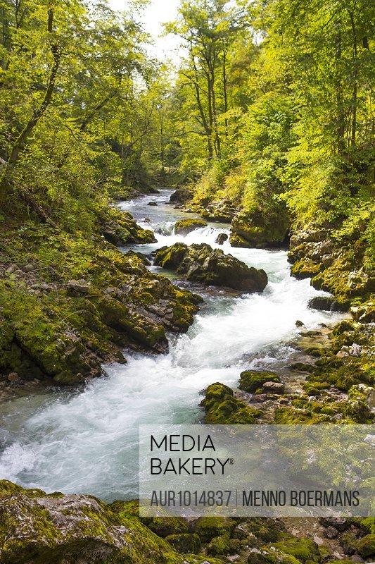 Mountain stream flowing through forest in Vintgar gorge, Gorje, Bled, Upper Carniola, Slovenia