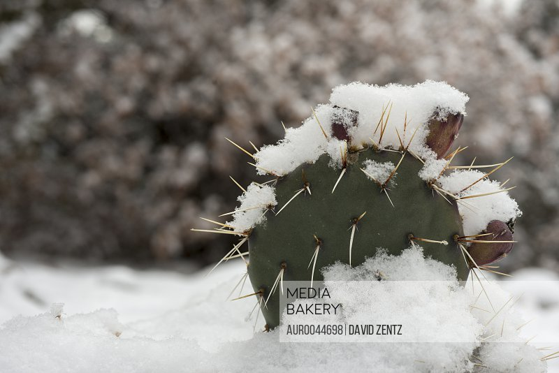 Snowflakes accumulate on a cactus in Truchas, New Mexico, on Dec. 22, 2013.