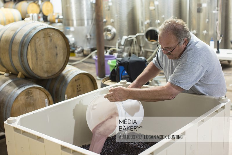 Jim Dolphin mixes a yeast mixture to a large container of grapes and juice. Wine makers taste the product several times before and after adding yeast to cause the fermentation in wine.<br><br><span style='color: red'>Editorial Use Only.</span><br><br>