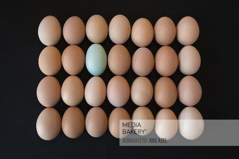 Brown and blue chicken eggs arranged in a grid.