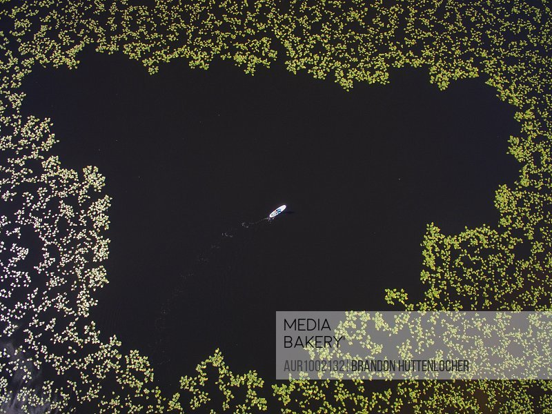 Aerial view of paddleboarder in the middle of lilly pads on an alpine lake in Colorado