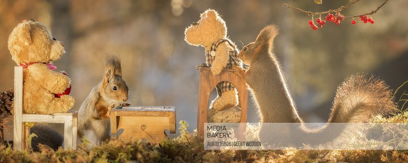 red squirrels with bears an desk and table