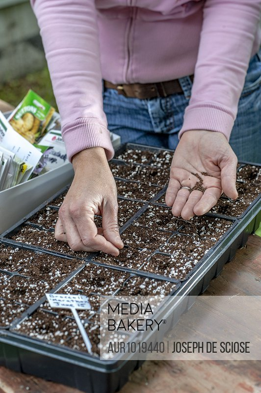 Arms of female gardener planting seeds in seed tray, Halifax, Nova��Scotia, Canada