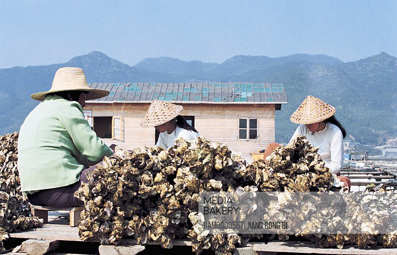 Fisherfolk Digging for Oyster in Farm, Luoyuan County, Fuzhou City, Fujian Province, People's Republic of China