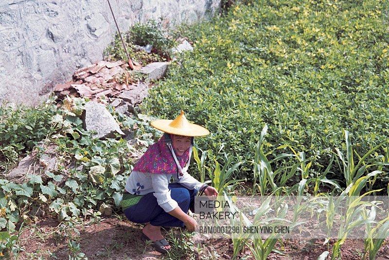 View of young woman working in field, Huian Women in Xiaozuo Village are working, Xiaozuo Village, Huian County, Fujian Province of People's Republic of China