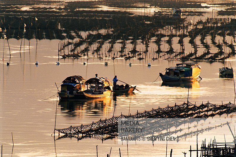 Marine cultivation of Yantian Village, Yantian Village, Xiaopu County, Fujian Province of the People's Republic of China