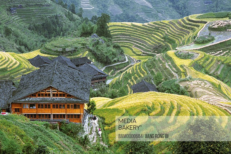 Elevated view of Longji mountain village by terraces, Longji mountain village, Longsheng County, Guilin City, Guangxi Zhuang Nationality Autonomous Region of People's Republic of China