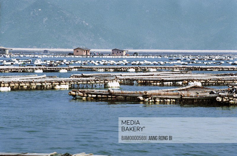 View of wooden planks in sea, View of Farms, Luoyuan County, Fuzhou City, Fujian Province, People's Republic of China
