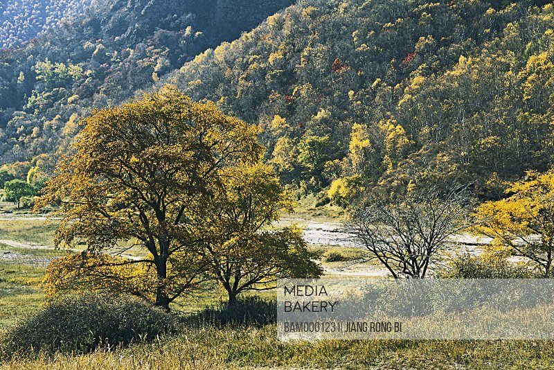 Forest of Laozhang Valley, Guyuan County, Hebei Province of People's Republic of China