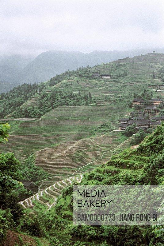 Panoramic view of Longji mountain terraced fields, Longsheng County, Guilin City, Guangxi Zhuang Nationality Autonomous Region of People's Republic of China