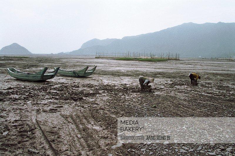 People working in muddy land mountains in the background, Land of Xiapu Beach , Xiapu County, Ningde City, Fujian Province, PRC