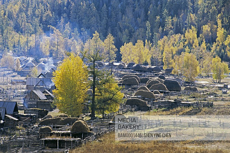 Pile of hay on wooden structure with trees in background, Morning of the Baihaba Village, Habahe County, Xinjiang Uygur Autonomous Region of People's Republic of China