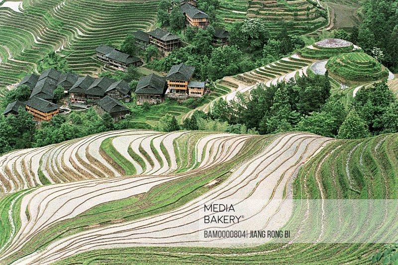 Elevated view of Longji terraced field in the Yao minority village, Longsheng County, Guilin City, Guangxi Zhuang Nationality Autonomous Region of People's Republic of China