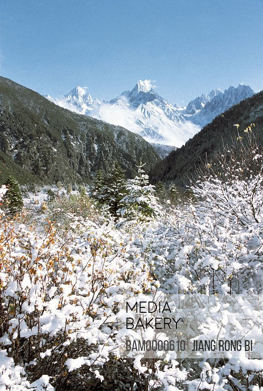 Snow-covered plants with mountains in the background, The snow mountain scenery of Mugecuo scenic area , Kangding County, Ganzi State, Sichuan Province of People's Republic of China