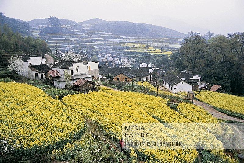 Rural scenery of Jiangling village, Jiangling Village, Wuyuan County, Jiangxi Province of People's Republic of China