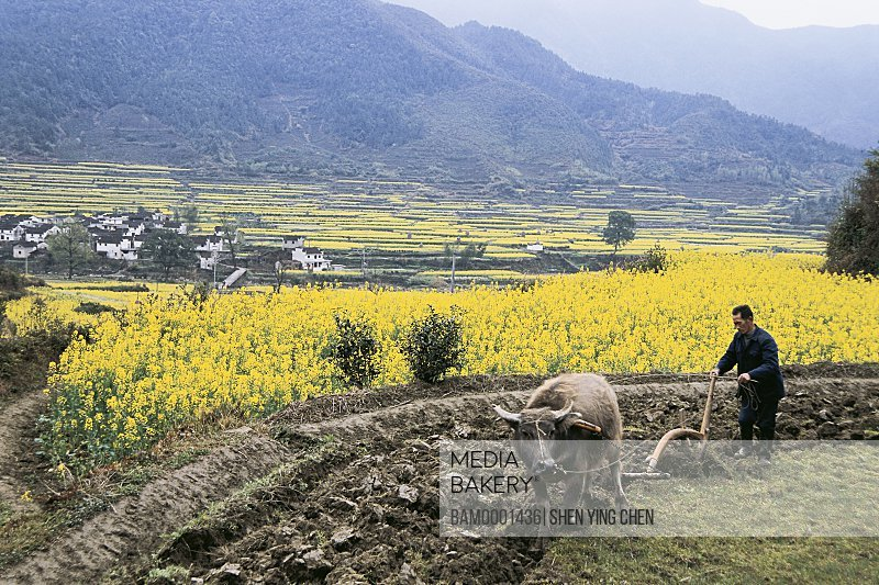 View of a mid adult man working in field, Rural scenery of Jiangling village, Jiangling Village, Wuyuan County, Jiangxi Province of People's Republic of China