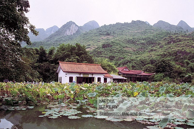 Lotus flowers of the Qixing lake in Tiangxing bridge scenic area, Anshun City, Guizhou Province of People's Republic of China