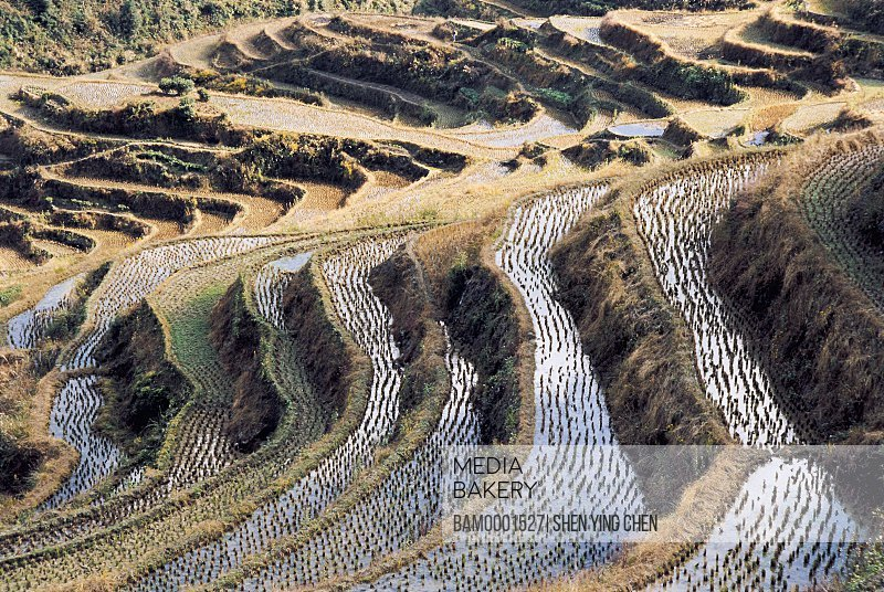 Terraced field near the Songxi County road, Songxi County, Fujian Province of People's Republic of China