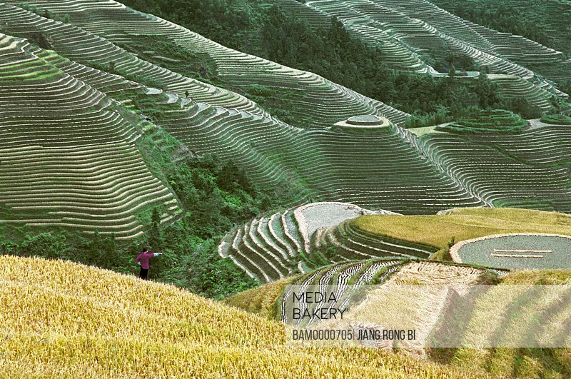 Scenery of Longji terraced fields, Longsheng County, Guilin City, Guangxi Zhuang Nationality Autonomous Region of People's Republic of China