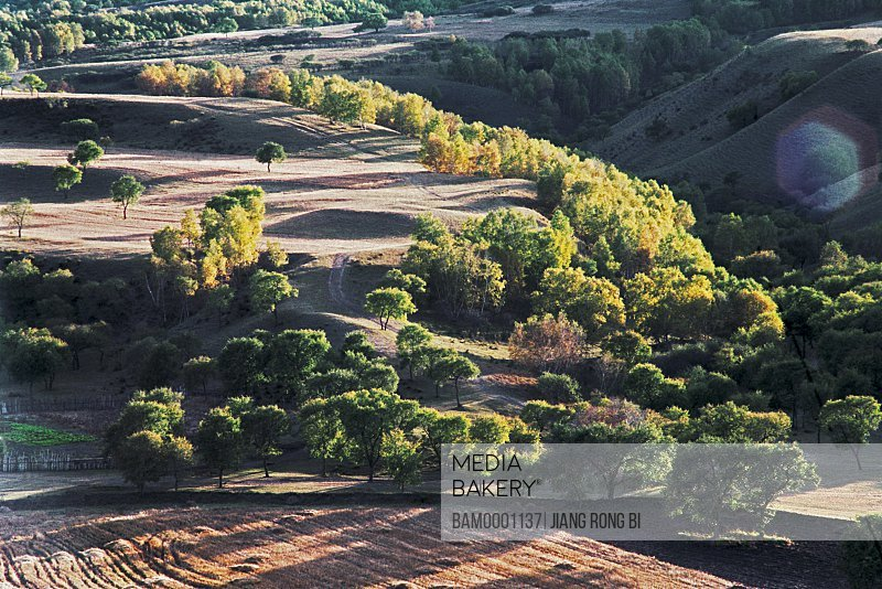 Trees on expanse of land, The full-colour brae of Bashang Prairie, Fengning County, Hebei Province of People's Republic of China