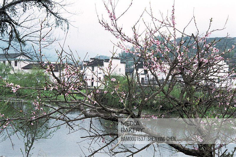 View of trees and lake with houses in the background, On the way sight of Qinghua town, Qinghua Town, Wuyuan County, Jiangxi Province of People's Republic of China