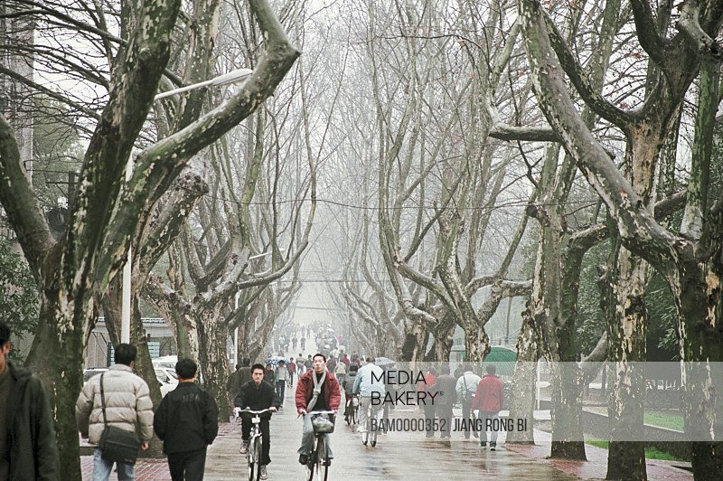 Group of people on a street amid bare trees, Huazhong University of Science and Engineering , Wuhan City, Hubei Province, People's Republic of China