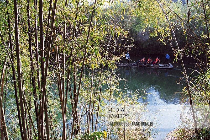 Bamboos by riverside, Jiuqu River of Mount Wuyi, Wuyishan City, Fujian Province, People's Republic of China