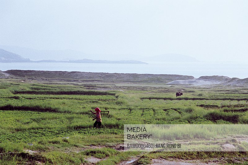 Person with spade walking in the field, Seaside Field, Pingtan County, Fujian Province, People's Republic of China
