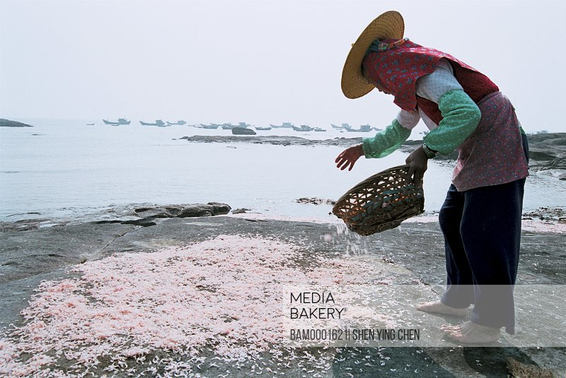 The Huian Women exposes the sun-dried shelled shrimp in the sunshine at the Xiaozuo Village seashore, Xiaozuo Village, Huian County, Fujian Province of People's Republic of China