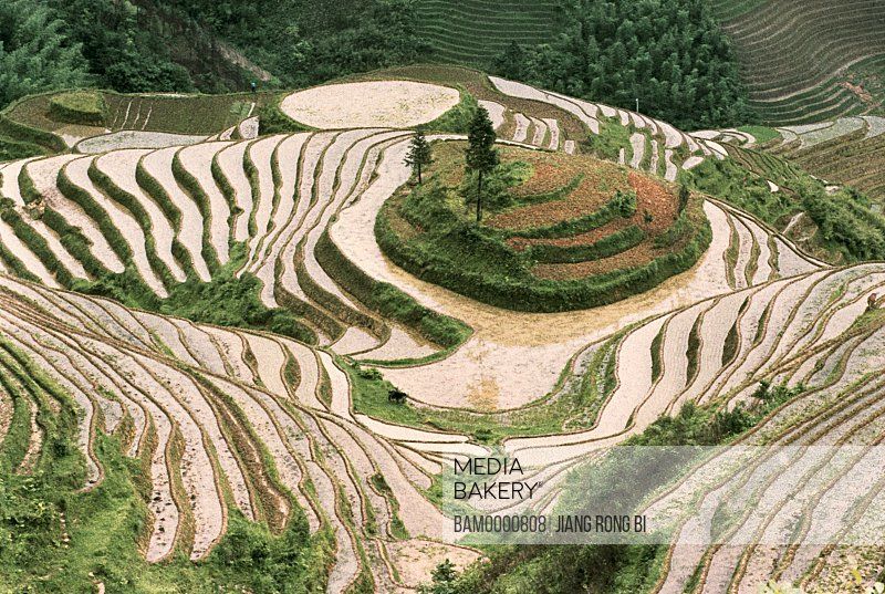 Elevated view of Longji terraced fields, Longsheng County, Guilin City, Guangxi Zhuang Nationality Autonomous Region of People's Republic of China