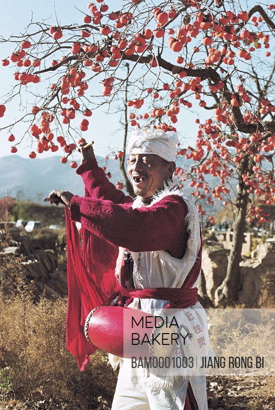 North Shanxi's Old Man Playing Waistdrum under Persimmon Tree , Yichuan County, Yan'an City, Shanxi Province, People's Republic of China