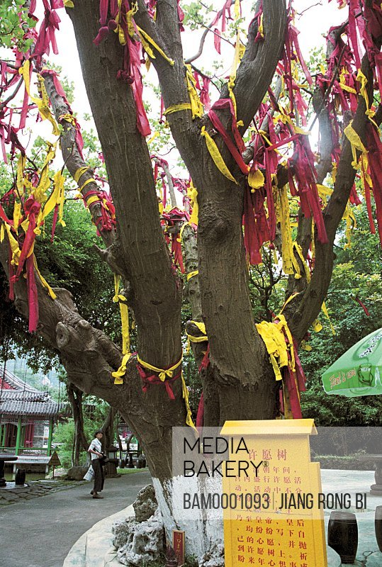 View of ribbon tied on tree trunk, Promise vow tree in New Yuanming garden, Zhuhai City, Guangdong Province of People's Republic of China