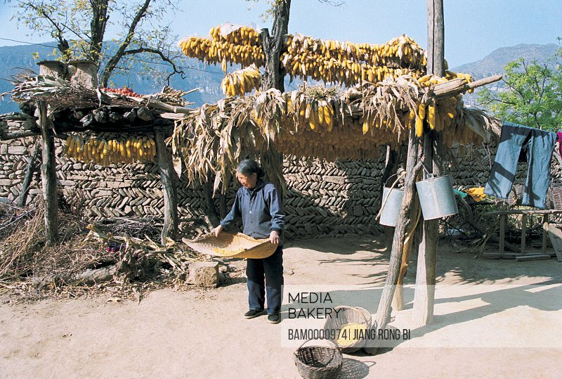 View of a woman winnowing corns, Chenjiazhuang Village's Women Farming in Corn Field, Yichuan County, Yan'an City, Shanxi Province, People's Republic of China